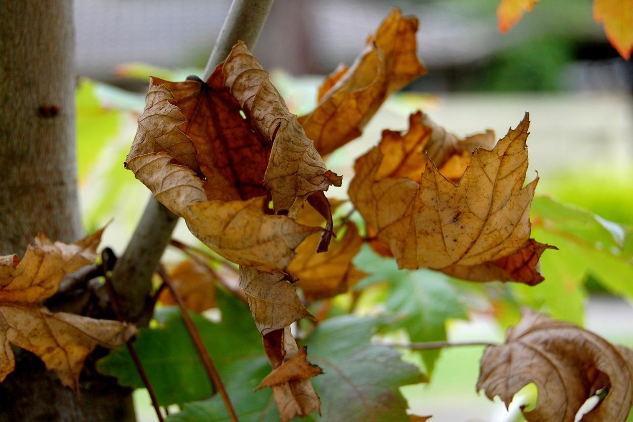 my decaying garden 2011 | The Amalgamation